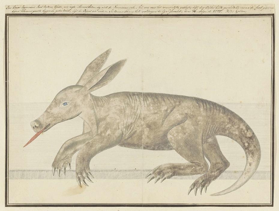 Kaaps aardvarken (Orycteropus afer), een voldragen embryo