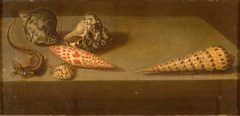 Lizard and Shells