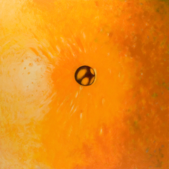 'Orange navel' (2006) oil on canvas, 130 x 130 cm