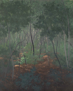 Sous-bois, arbres légers