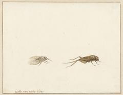 Twee insecten
