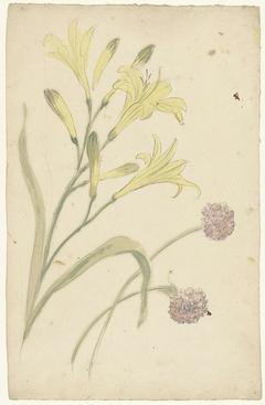 Bloemstudies van een gele lelie en een bloeiende ui