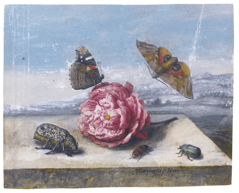 Butterflies and beetles around a rose on a stone ledge