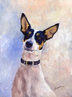Daisy - Portrait of a Ratonero Bodeguero Andaluz