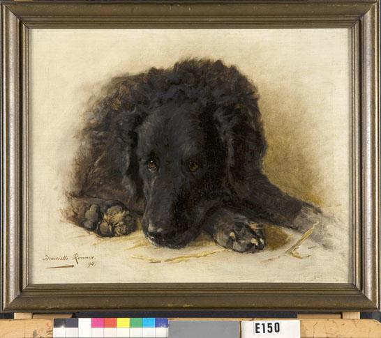Een zwarte hond