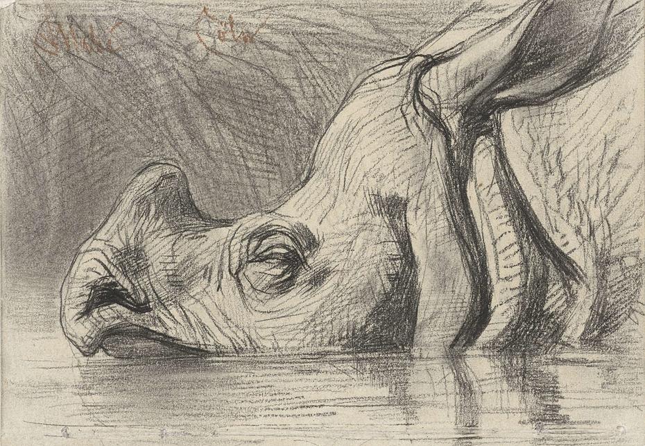 Kop van een neushoorn, half in het water