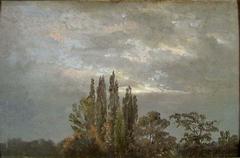 Morning Mist over Poplars