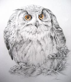 owl/illustration