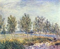 Poplars on a River Bank