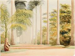 Avenue of Palms. Botanical Gardens. Rio de Janeiro