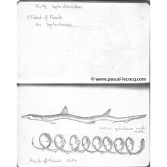 Carnet Bleu: Encyclopedia of…shark, vol.I p14 by Pascal