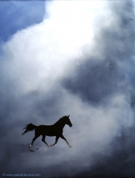 CINQUIEME CAVALIER -The Fifth Rider - by Pascal