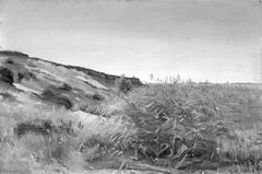 Dunes and Rushes