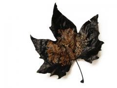 Hoja / Leaf
