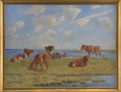 Kalve ved stranden