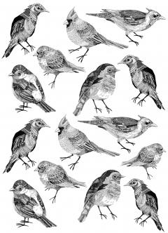Line Drawing (series)