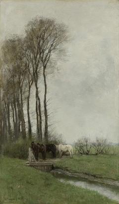 Paarden bij het hek