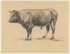 Staande stier, naar links