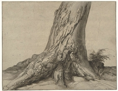 Study of a tree trunk with roots