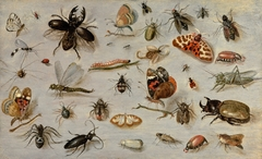 A Study of Butterflies, Moths, Spiders, and Insects