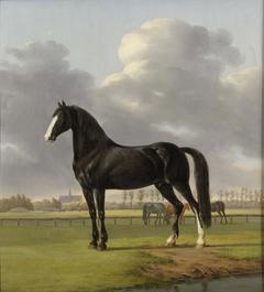 Adriaan van der Hoop's Trotter 'De Vlugge' (The Fast One) in a Meadow