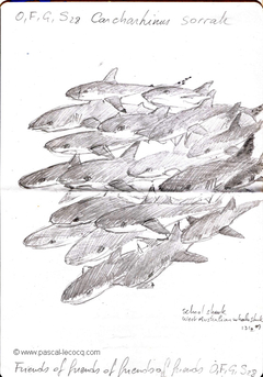 Carnet Bleu: Encyclopedia of…shark, vol.XII p12 - by Pascal