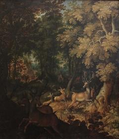 Chasse au cerf dans une forêt