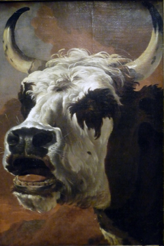 Head of an Ox
