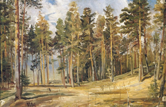 Pines. Sunny day