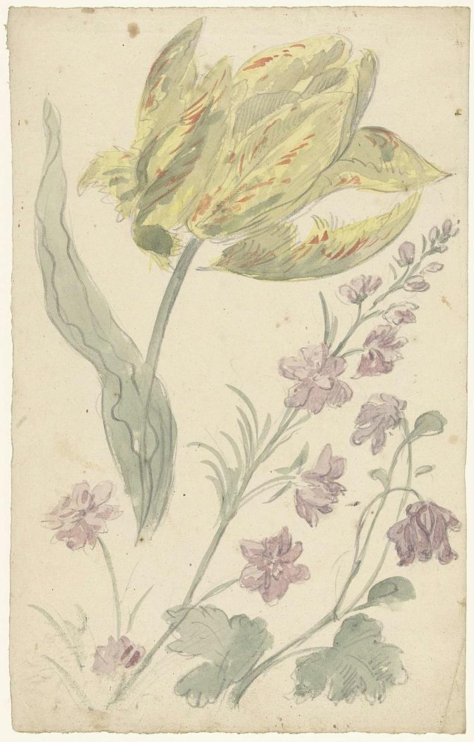 Studie van een gele tulp en een andere plant