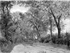 Winding Lane in a Wood
