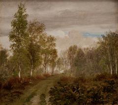Birketræer på Læsø efter regn
