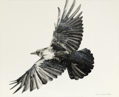 Crow study