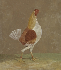 Fighting Cocks: a Pale-Breasted Fighting Cock, Facing Rght