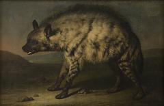 Hyænen i menageriet ved Frederiksberg Slot