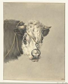 Kop van een koe, met een ring door de neus, van voren