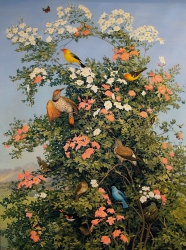 Rocky Mountain Birds and Wild Roses