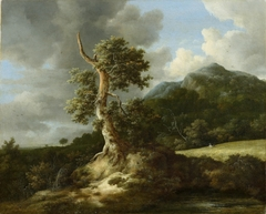 Rolling landscape with an oak before a grainfield