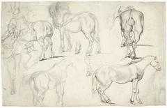 Studieblad met studies van paarden