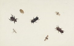 Study of Beetles and Moths