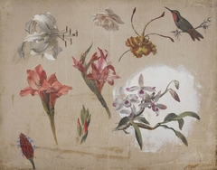 Study of Varied Flowers with a Hummingbird