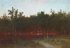Twilight in the Cedars at Darien, Connecticut